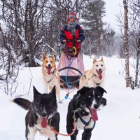 winter activities dogsledding hundeschlitten